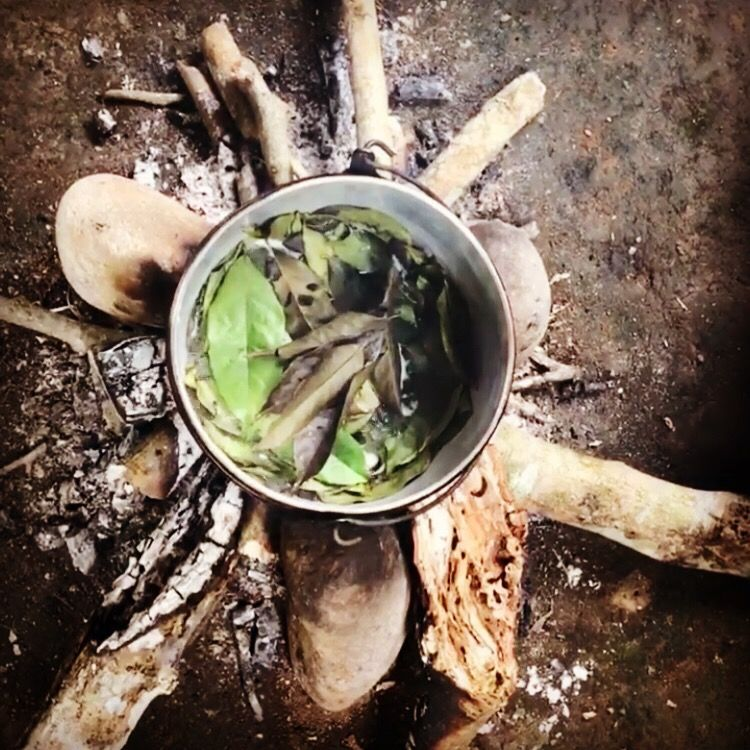 """""""brewing guayusa in the Amazon jungle"""""""