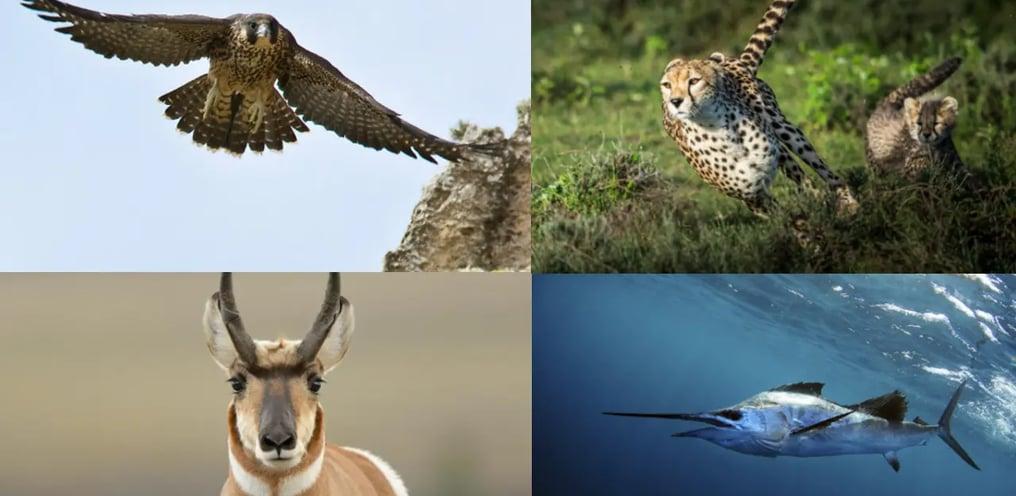 top 8 hewan yang ada di bumi