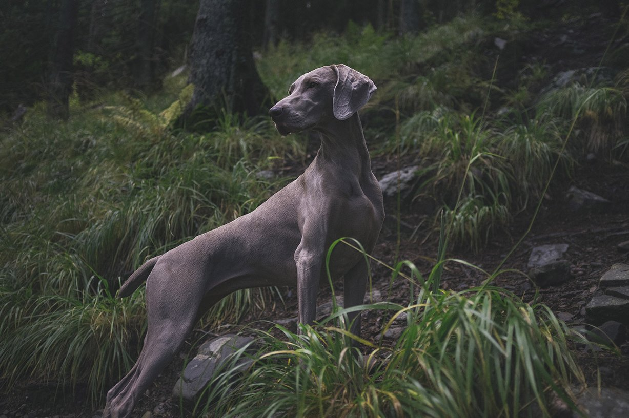 Waggly Trails Aberfeldy Dog adventures & Pet sitting Services. Dog walking Perthshire