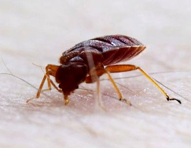 臭虫公司-诗巫-民都鲁-Bedbugs Company-Sibu-Bintulu