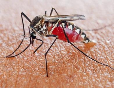 蚊子公司-诗巫-民都鲁-Mosquitoes Company-Sibu-Bintulu