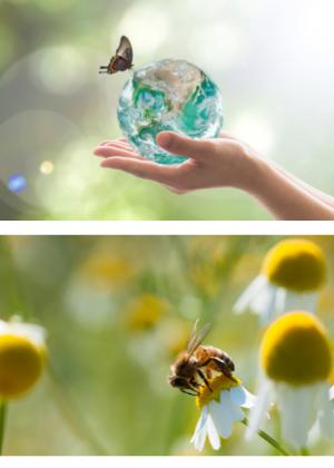 Préservation biodiversité et textile
