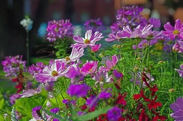 apa perbedaan bunga annual dengan bunga parennial